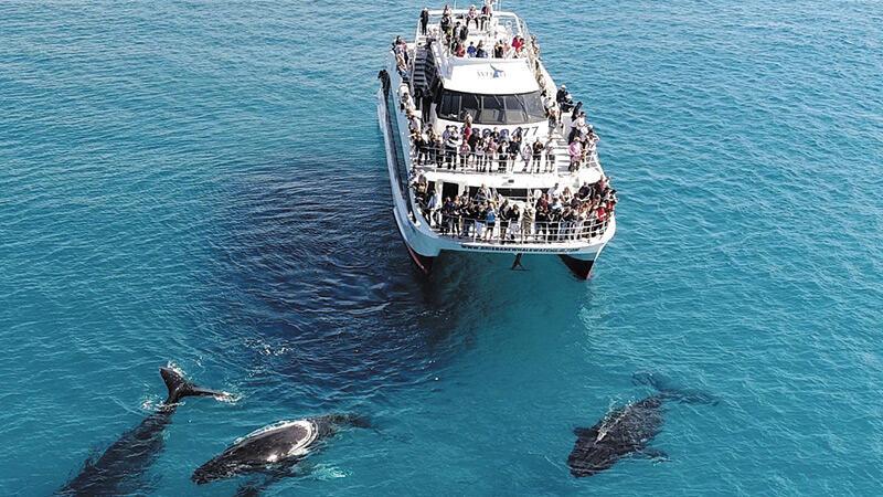 Eye Spy A Whale